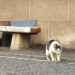 秋葉原・柳森神社の猫
